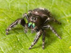 """Spiders Aren't Animals!"" Well, Actually…."